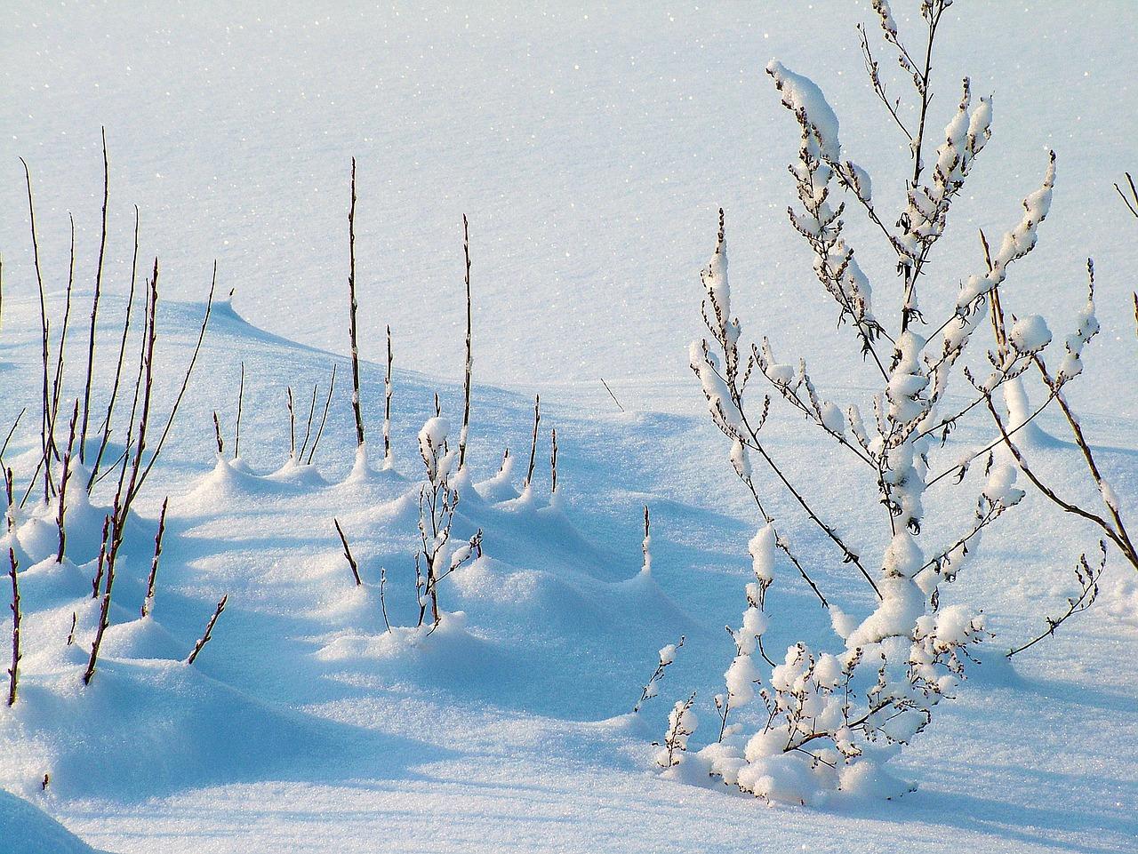 winter-234721_1280